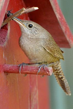 Songbirds 2012