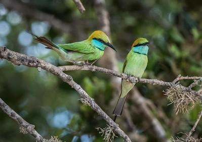 Sri Lanka Birds