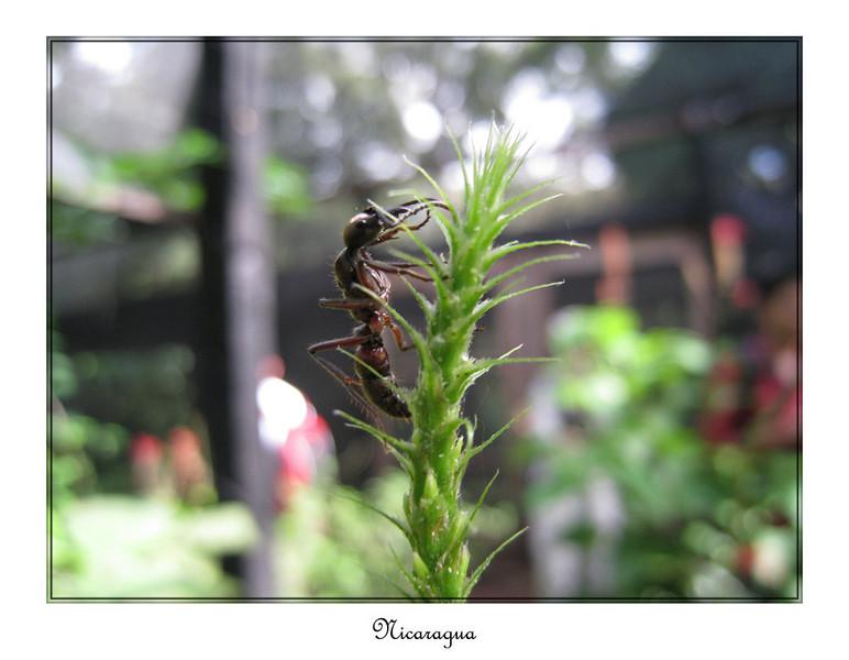 0615_framed_small.jpg