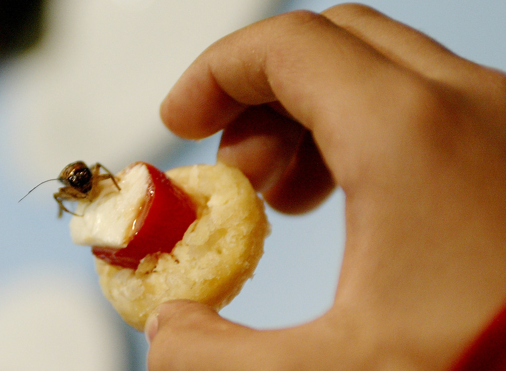 ". A boy from New York\'s Public School 7 from the Bronx holds an hors d\'oeuvre prepared with an insect, before eating it at New York\'s Museum of Natural History, April 20, 2004. Noted chefs were preparing inventive dishes for school children with insects as part of the Museum\'s ""Adventures in the Global Kitchen,\"" a program that highlights cultures around the world through their cuisine. The Museum was launching the program in conjunction with the release of the new Imax film \""A Rainforest Adventure-Bugs.\"" REUTERS/Mike Segar"