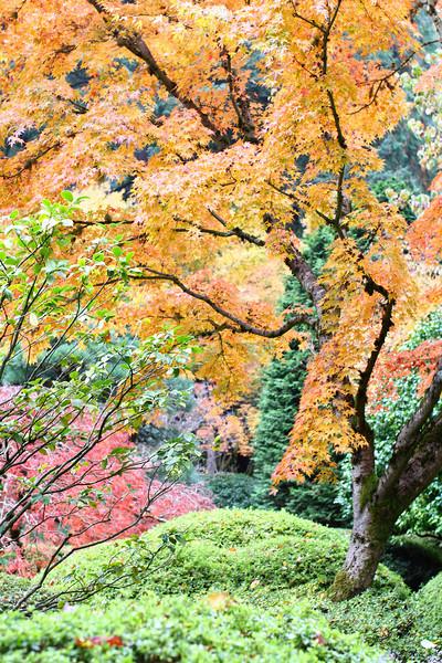 Portland Japanese Garden  11-11-11  3499.jpg