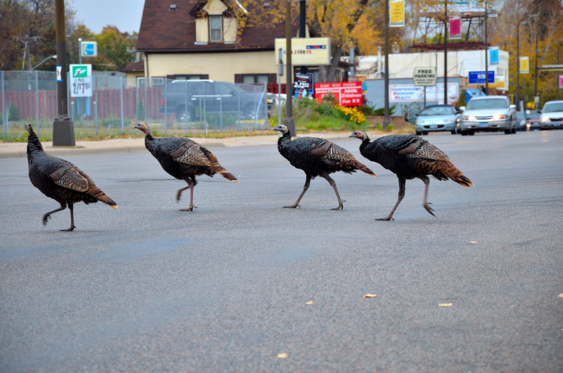 Turkey's In MPLS_049.JPG