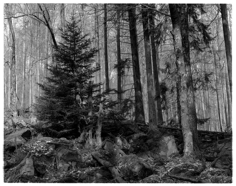 Odenwald006.jpg