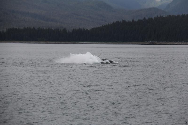 20160717-114 - WEX-Breaching Whale.JPG