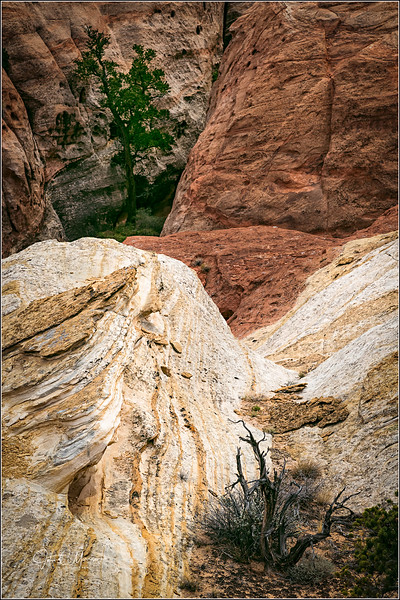 J85_2765 Tree canyon LPN r1 W.jpg