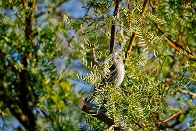 More Birds at the RV Park December 2020