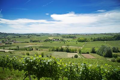 03.06.2010 // Langhe & Monferrato