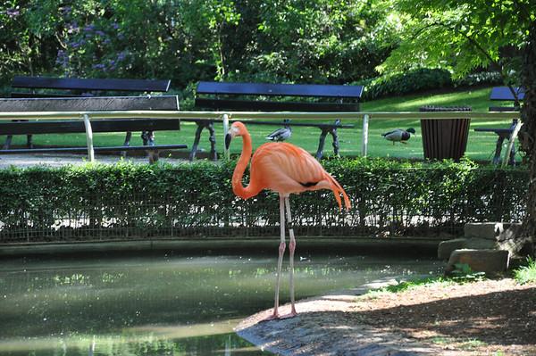 20110501 Antwerpen Zoo