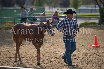 Yearling fillies (Friday Classes)