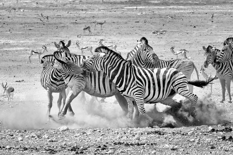 Namibia 69A9207.jpg