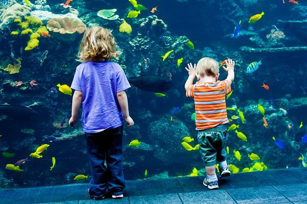Georgia Aquarium - Sept 2011