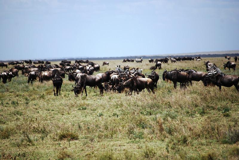 Serengeti (56).JPG