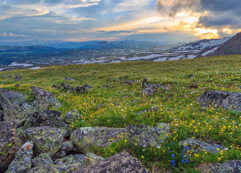 Beartooth Blooms