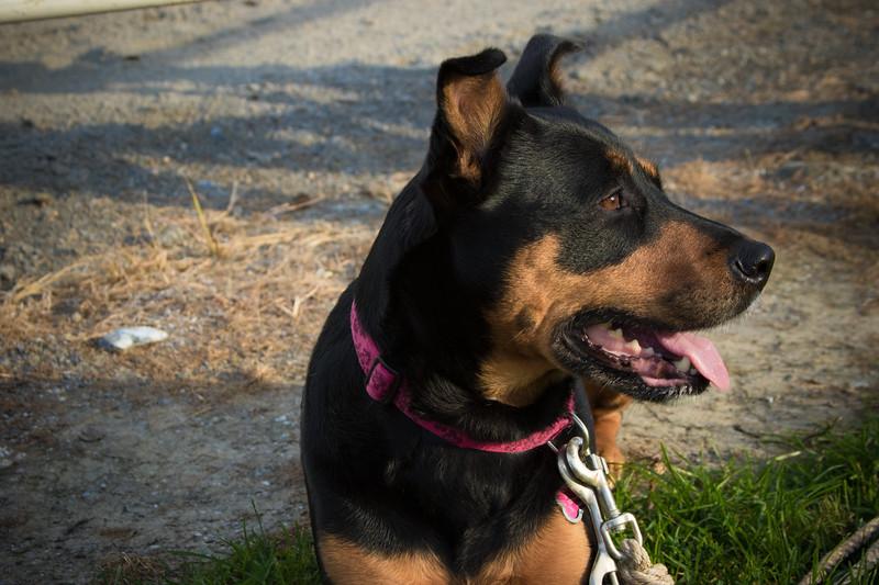 Stephanie Runion doggie-3.jpg