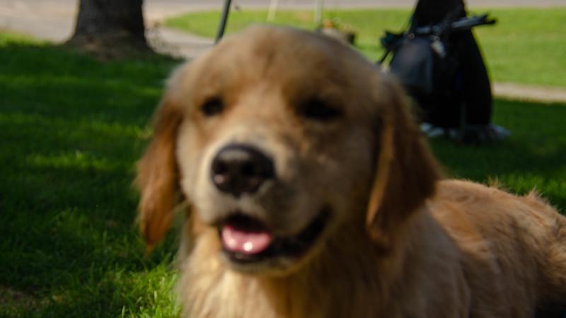 PuppyParty18-544.jpg