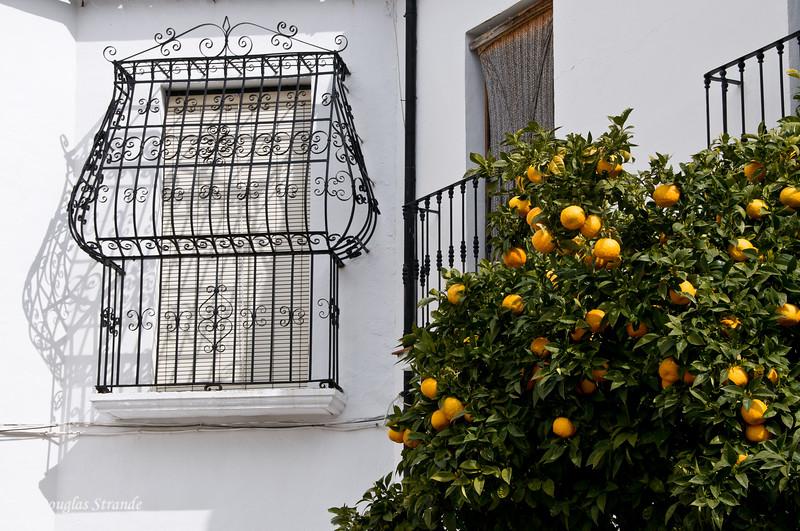 Mon 3/14 in Ronda: Classic Spanish look...iron-work on the windows, oranges nearby.