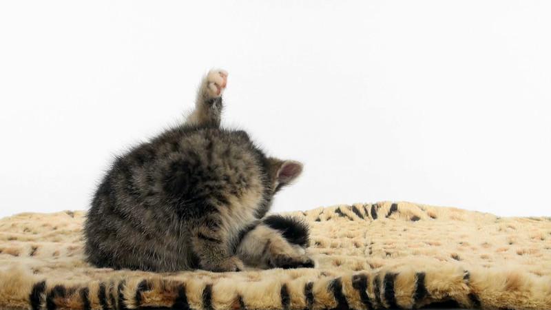 kitten_306_01.mov