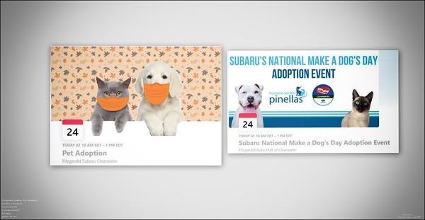 Daily Sightings...2020-10-24...Fitzgerald Subaru Pet Adoption