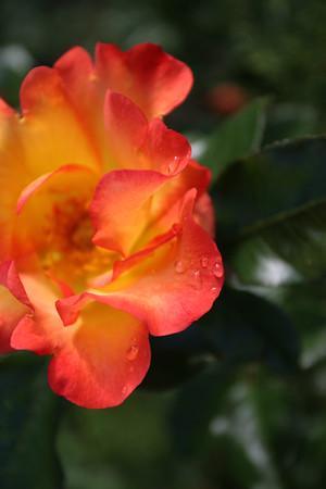 Flowers_060510_0039.JPG