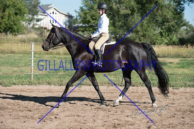 Colorado Stock Horse August 21st 2016