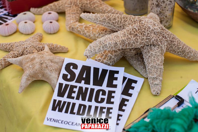 VenicePaparazzi-4.jpg