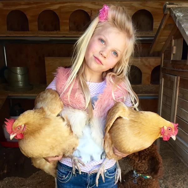 ChickensKalyna.jpeg