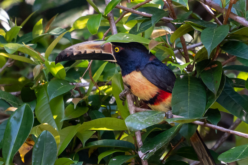 Costa Rica-1205.jpg