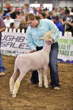 Market Lamb Show