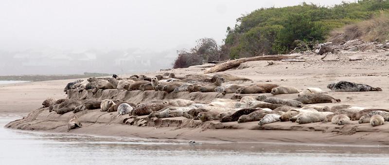 CoastTrip_July_2012_235.jpg