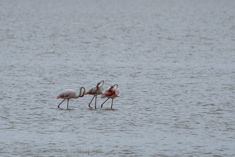 Lake Manyara National Park flamingoes-2078.jpg