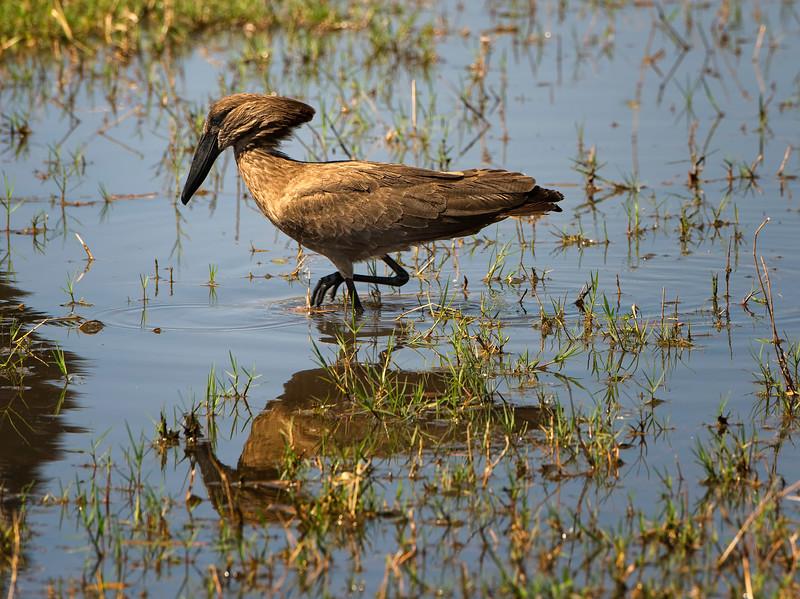2014-08Aug-Okavango Masters-36-Edit.jpg