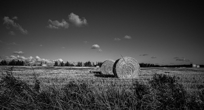 The Hay in A Roll