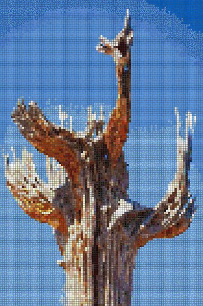V Sahuaro Ribs  4 x 6_mosaic.png