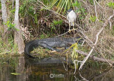 Florida Everglades Shark Valley