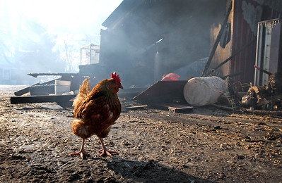 20171212 - Morning fire near Marengo destroys barn, kills 'a lot' of chickens (hrb)