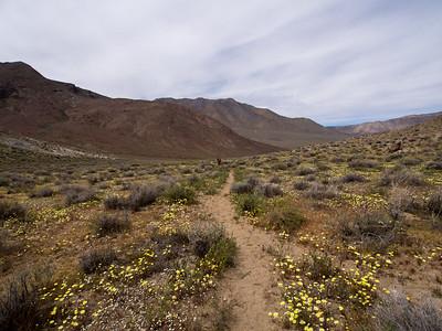 Needle Peak - Death Valley NP - 03.28.16