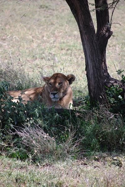 Serengeti (174).JPG