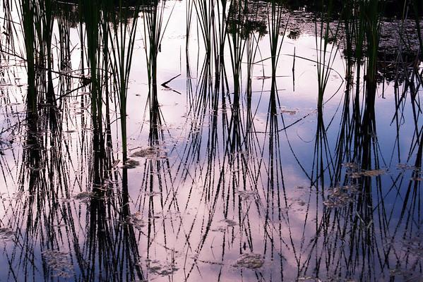 333.91: Wetlands