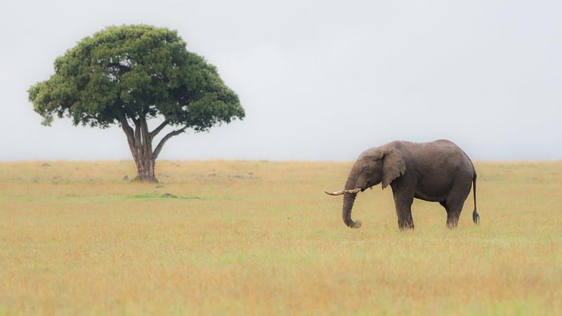 Elephants-0222.jpg