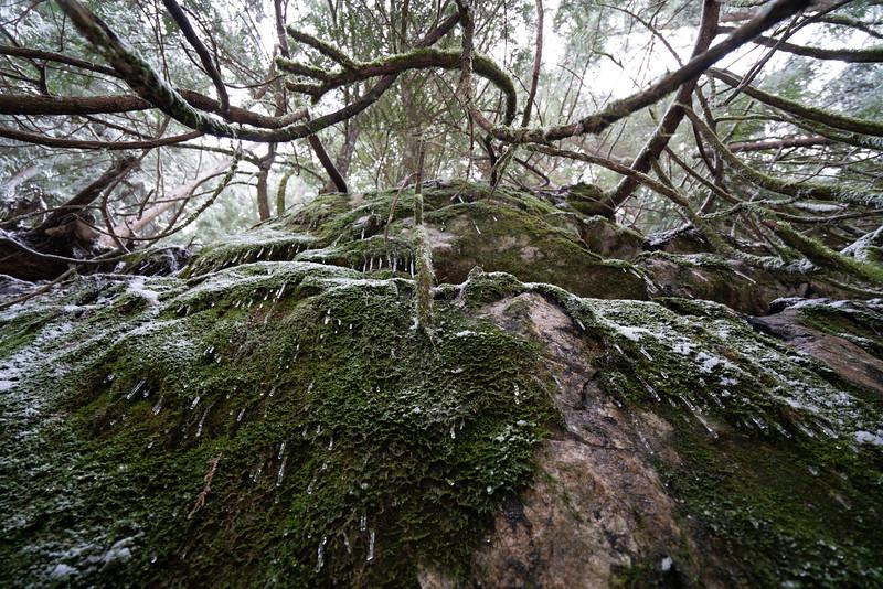 19_02_03 snow day in north van 0134.jpg