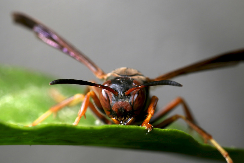 Insect macrophotography