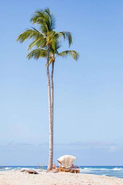 Travel_Hawaii_032020_0118.jpg
