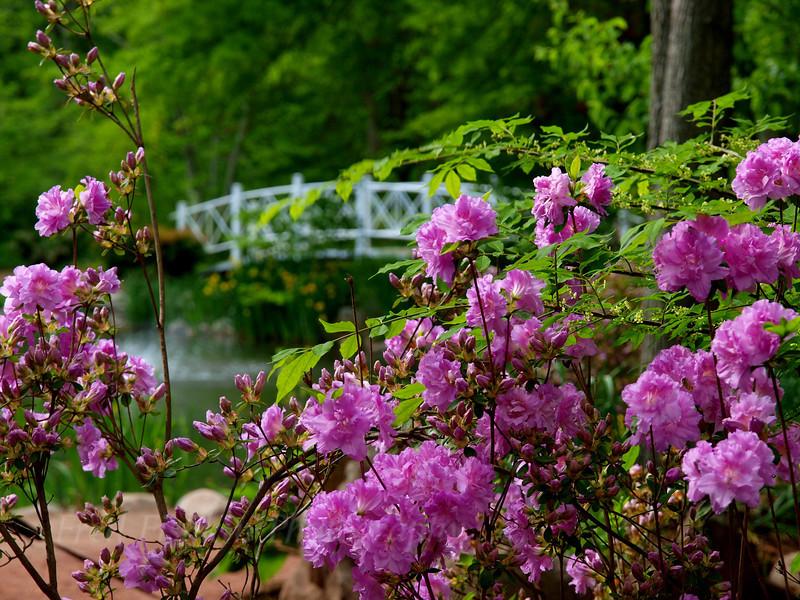 Sayen bridge 2.jpg