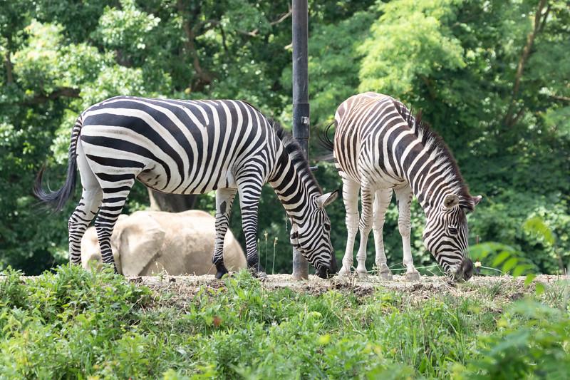 Pittsburgh Zoo-7221.jpg