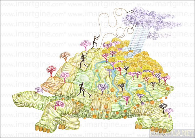 awarded specialprize marcos turtle.png