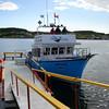 Whale, St. Anthony, Newfoundland - 1