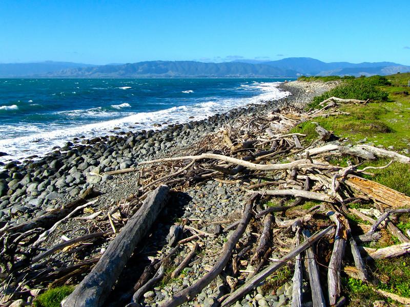 Kapiti Island coast