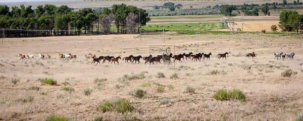 Ranch38-3111.jpg