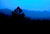 Blue and Black Abstract photograph painting a tree line in the early morning.