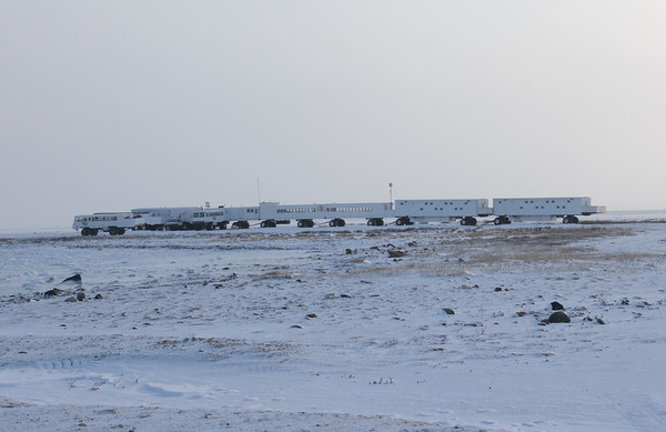 Polar Bear Trip 2014